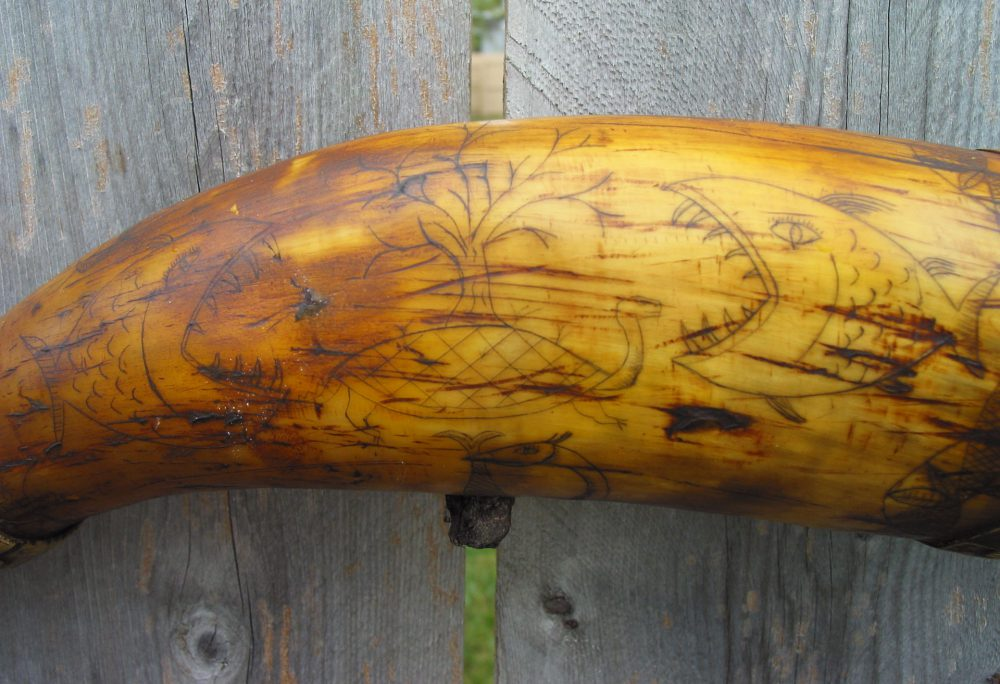 Brass Banded Scrimshawed Powder Horn 4